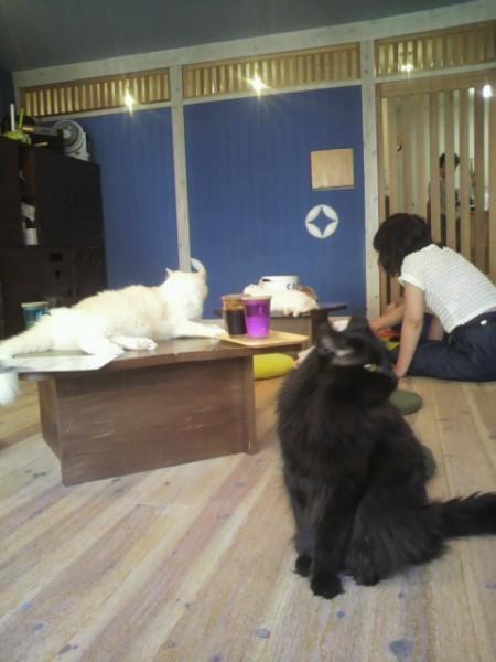猫2 (1)