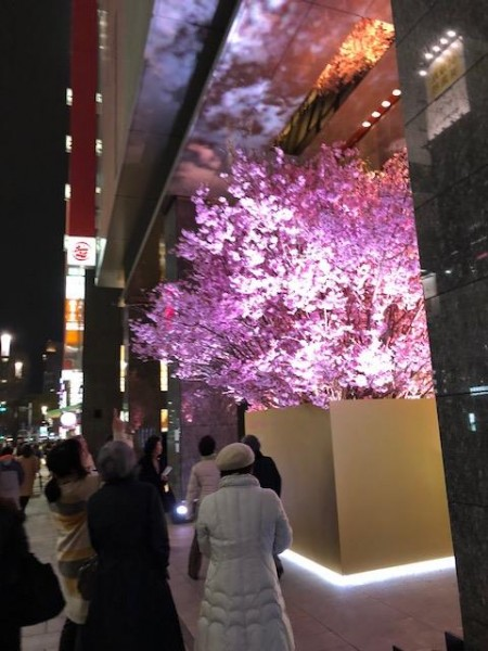 銀座夜桜見物