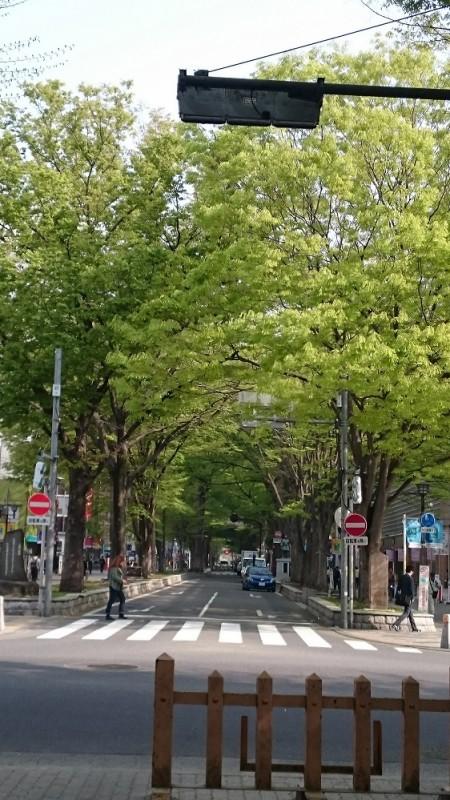 ケヤキ並木 (1)